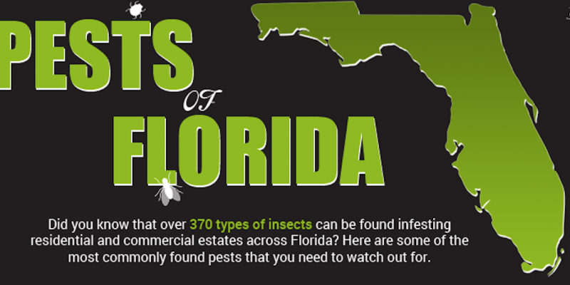 pests of Florida graphic